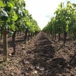 ブドウの栽培 必要条件